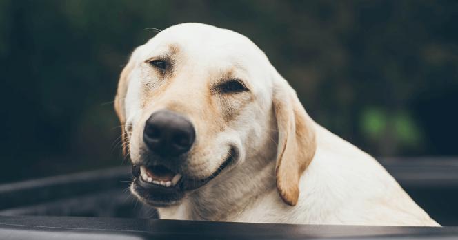 Mi jelenti valójában a boldogság érzését?